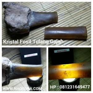 Fosil Tulang Gajah Kristal