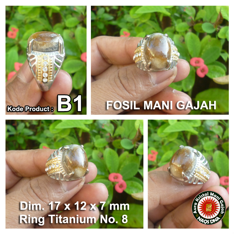 Cincin Fosil Mani Gajah Super Power