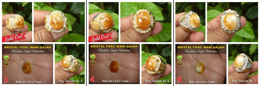 Fosil Mani Gajah Premium